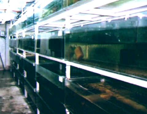 Ngel fornaro piscicultura mi criadero for Tanques para cria de peces