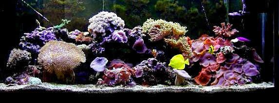 El acuarista secciones el acuario marino introducci n - Decoracion acuario marino ...